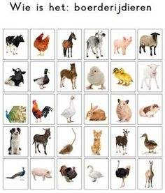 Een alternatieve kaart voor het spel 'Wie is het'. Onderwerp: boerderijdieren. Farm Animals, Animals And Pets, French For Beginners, Farm Activities, Kids Class, Montessori Materials, Animal Projects, Pre School, Teaching Kids
