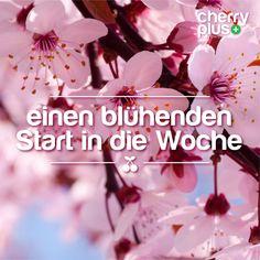 #Spring #cherryblossom #cherryplus #vegan #montmorency