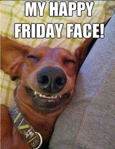 Happy Friday to You! Happy Friday to You! Happy Friday to You! Love My Dog, Puppy Love, Funny Friday Memes, Its Friday Quotes, Tgif Funny, Friday Funnies, Monday Memes, Funny Happy, Funny Animal Pictures