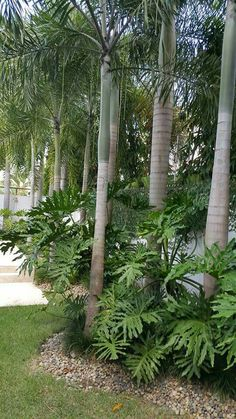 philodendron under palm Florida Landscaping, Florida Gardening, Tropical Landscaping, Backyard Landscaping, Ponds Backyard, Tropical Garden Design, Tropical Backyard, Garden Landscape Design, Tropical Flowers