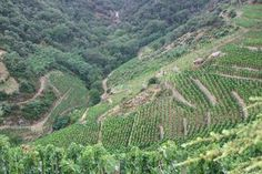 Some majestic vineyards in Cornas (France).