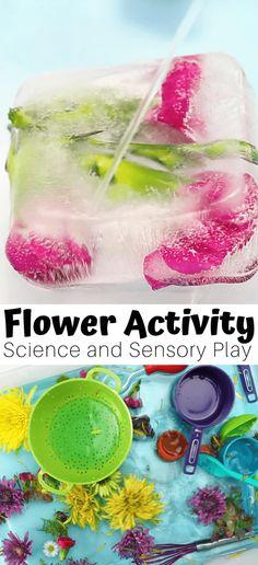3 in 1 Flower Activities For Preschoolers and Spring Science
