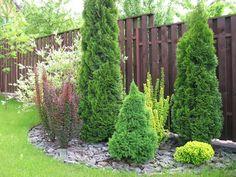 backyard designs – Gardening Ideas, Tips & Techniques Flower Landscape, Landscape Design, Garden Design, Landscaping Along Fence, Backyard Landscaping, Back Gardens, Outdoor Gardens, Evergreen Garden, Planting Bulbs