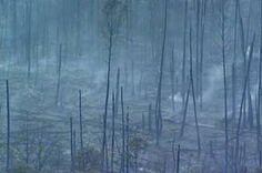 Incêndio atinge parque de Águas Claras - http://noticiasembrasilia.com.br/noticias-distrito-federal-cidade-brasilia/2015/10/15/incendio-atinge-parque-de-aguas-claras/