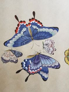 愛 Butterfly Painting, Butterfly Art, Flower Art, Butterflies, Art And Illustration, Butterfly Illustration, Japanese Drawings, Japanese Art, Korean Painting