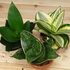wei bl hende blumen und pflanzen bestimmen zimmerpflanzen pinterest pflanzen kaktus und. Black Bedroom Furniture Sets. Home Design Ideas