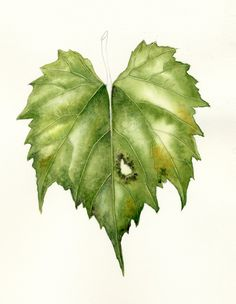 Watercolor Painting Techniques for Leaves | How to Lift Veins in Watercolor for the Botanical Artist