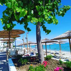 #CoconesBar #Cocones #BlueFlagBeach #CocktailBar #Polichrono #Halkidiki #Cocktails #StreetFood #HalkidikiBars #Summer2020 #Stay_Safe Sbar, Blue Flag, Stay Safe, Cocktails, Patio, Beach, Outdoor Decor, Summer, Home Decor