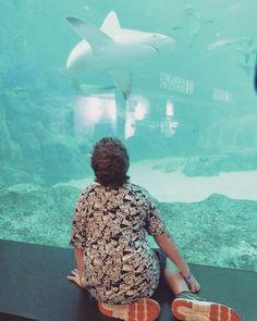 #Singapore #Sentosa #SEAAquarium #explore #explorer #exploramum #explorason #exploring #singlemom #singlemum #schooling #singleparenttravel #thingstodo #travelling #traveling #traveler #travel #traveller #world #worldtravel #travelexpert #worldschooling #worldtravelexperts @SEAAQuarium @sentosa_island