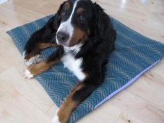 DIY Network has step-by-step instructions on how to make an inexpensive nap cushion for your pet. >> http://www.diynetwork.com/made-and-remade/make-it/how-to-make-a-durable-dog-bed-for-less-than-25?soc=pinterest