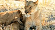 Africa Travel Tours & Trips: Peregrine Adventures
