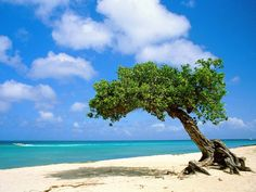 Wunderschöner Sandstrand in Aruba.