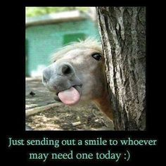 sending out a smile funny quotes cute memes animals quote smile horse humor