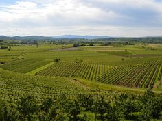 """Located near the border of Italy, the Goriska Brda wine region is often referred to as the """"Tuscany of Slovenia."""" Widely respect for its Rebula white wine, Brda is one of 3 wine regions in the country."""