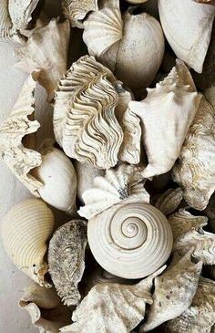 """""""...and here are the whelks...always cracked and broken...All my life...I have felt there is something more wonderful than gloss-than wholeness."""" Mary Oliver """"Whelks"""""""