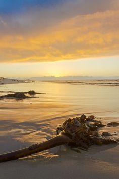 Muizenberg Sunrise Kelp by Chris Cunnington on 500px
