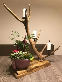 Antler candle holder Deer antler decoration different? A very beautiful antler candle holder on acacia wood. A real eye Deer Antler Crafts, Antler Art, Antler Candle Holder, Candle Holders, Branch Decor, Driftwood Crafts, Deco Floral, Diy Wood Projects, Woodworking Crafts