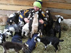 FAQ's and Other Information About Mini-Dairy Goats