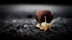 Snail  © Sándor Daku