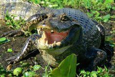faune tropicale | Animales Argentinos [Fauna Argentina] - Taringa!