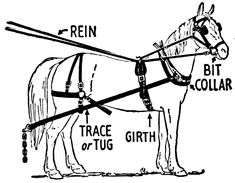 team horse harness parts harness parts explained with graphics rh pinterest com Pony Harness Diagram Draft Harness Diagram
