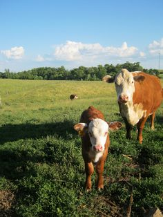 FARMHOUSE – ANIMALS – springtime is a time for renewal and rebirth on the farm.