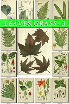 LEAVES GRASS-3 Collection of 219 vintage by ArtVintage1800s