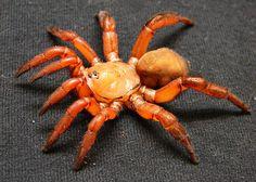 trapdoor spider   Tumblr