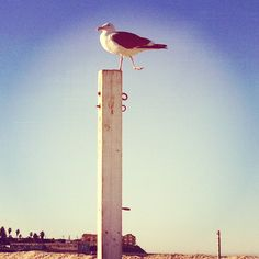 Have you heard? The bird is the word. Ocean Beach, San Diego.