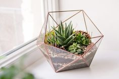 15 great plants for the terrarium in your home or office 15 great plants for the terrarium in your h Terrarium Diy, Terrarium Stand, Best Terrarium Plants, How To Make Terrariums, Glass Terrarium, Ficus Pumila, Air Plant Display, Glass Planter, Glass Vase