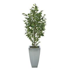 House of Silk Flowers Ficus Tree in Planter Base Color: Silver, Leaves Color: Variegated