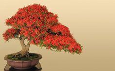japanese-bonsai-tree-art-wallpaper-4.jpg (1600×1000)