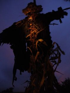 My 2015 scarecrow (October Pun'kin) with the perfect purple sunset!
