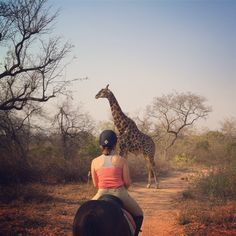 Ellie updates us on Jeffrey the giraffe, cosy the chimp and an adventure-filled week...http://bit.ly/2crL1K8