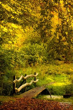 Autumn Colors, the Sonian forest in Belgium.