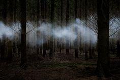 Ellie Davies - 'Between the Trees' series