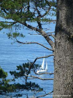 Zwischen Kiefern schimmert ein weißes Segelboot hervor. (Beitrag zur Foto-Blogparade)