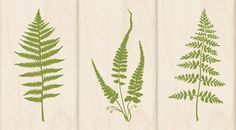 Fern Rubber Stamps - for Invitations