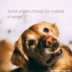 quotes about dogs quotes Dog Quotes + Sayings to Make You Laugh, Cry and Love Your Dog Even More - Yo Doggy Dog Fake Love Quotes, Lesbian Love Quotes, Love Quotes For Her, Best Dog Quotes, Cute Dog Quotes, Islamic Love Quotes, Dog Sayings, Quotes On Dogs, A Girl And Her Dog Quotes