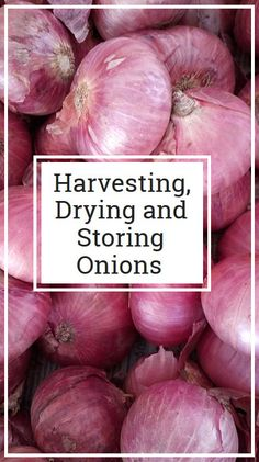 All your onion questions answered here!
