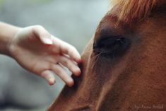 The touch is freeing Horse Girl, Horse Love, Horse Hay, The Scorpio Races, All The Pretty Horses, Beautiful Horses, Pinterest Photos, Equine Photography, Character Aesthetic