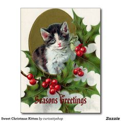 Sweet Christmas Kitten Postcard
