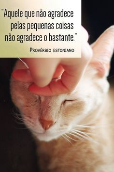 #Provérbio
