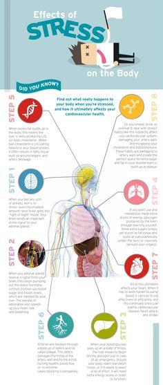 Effects of stress on the body. Stress less. Stop stress. Stress and anxiety Work Stress, Stress Less, Stress And Anxiety, Anxiety Thoughts, Anxiety Quotes, Teachers, Wellness, Training, School