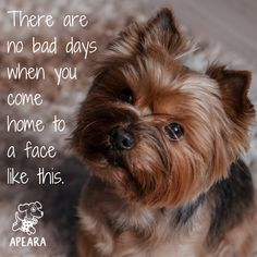Amen! There never was, almost 2 weeks since we lost our precious baby Fifi and every day has been bad since.  Miss our baby girl.