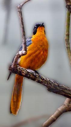 Vogel, Zoo Wilhelma, Hintegrundbild für Huawei P9, 1080x1920 px