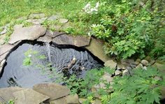 Adorable pond  Small but natural looking, the stone really makes it nice and the simple greenery around it too