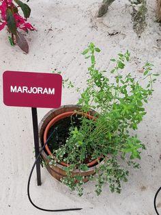 Edible Wild Plants, Planter Pots