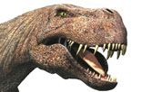 Tyrannosaurus: One of the Biggest Flesh-Eating Predators of All Time »  The Tyrannosaurus body could extend the entire width of a tennis court. Up to seven tons of muscle and other tissues filled out the rest of its sturdy frame. This was a monster carnivore that must have terrified all other dinosaurs during the Late Cretaceous.
