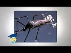 Where do Mosquitoes go in the winter: - - Platinum Pest Solutions